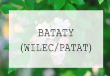 Bataty - uprawa w ogrodzie słodkich ziemniaków krok po kroku