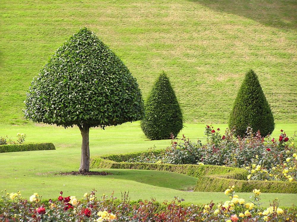 Jak wybrać firmę do założenia ogrodu