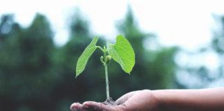 Uprawa roślin w growboxach