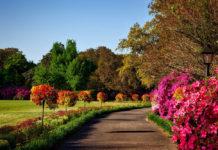 Projekt ogrodu - jak urządzić mały ogród?