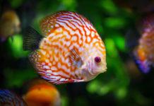 Jak wybrać odpowiedni pokarm dla rybek akwariowych?
