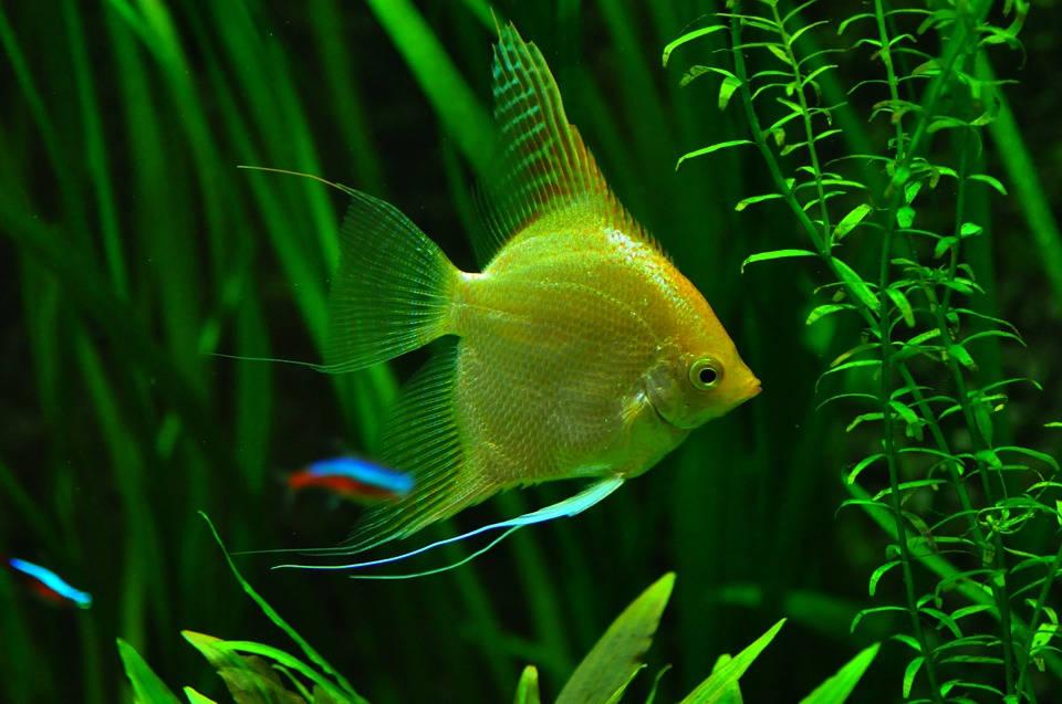 Jaka temperatura jest dobra dla ryb?