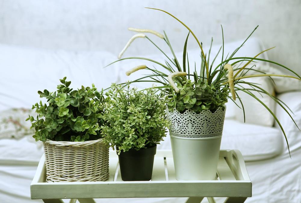 Poznaj 5 Roślin Doniczkowych Do Sypialni O Właściwościach